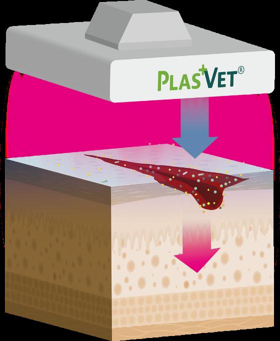 plasvet-wirkansatz